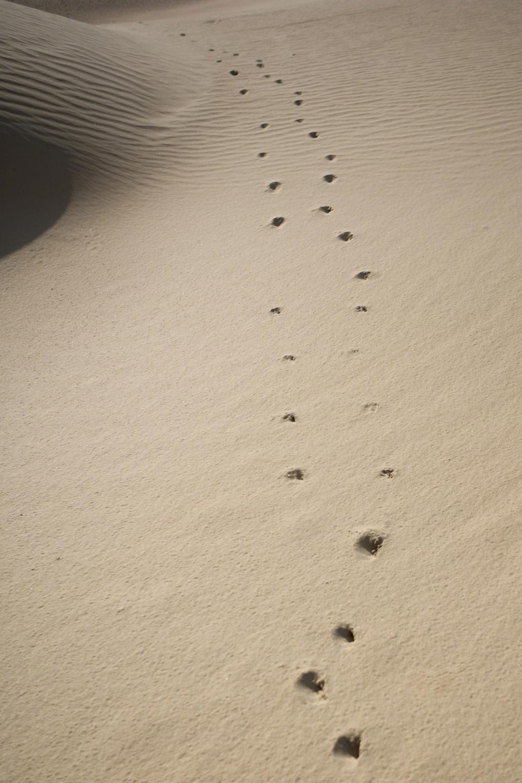 saarshot dierenspoor in zand