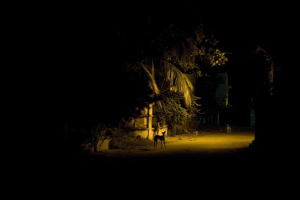 saarshot honden in de nacht Dui
