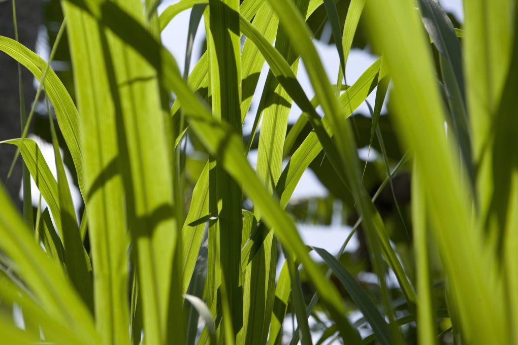 saarshot tropische planten